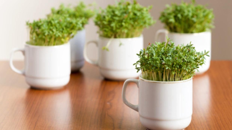 7 BEST foods for histamine intolerance