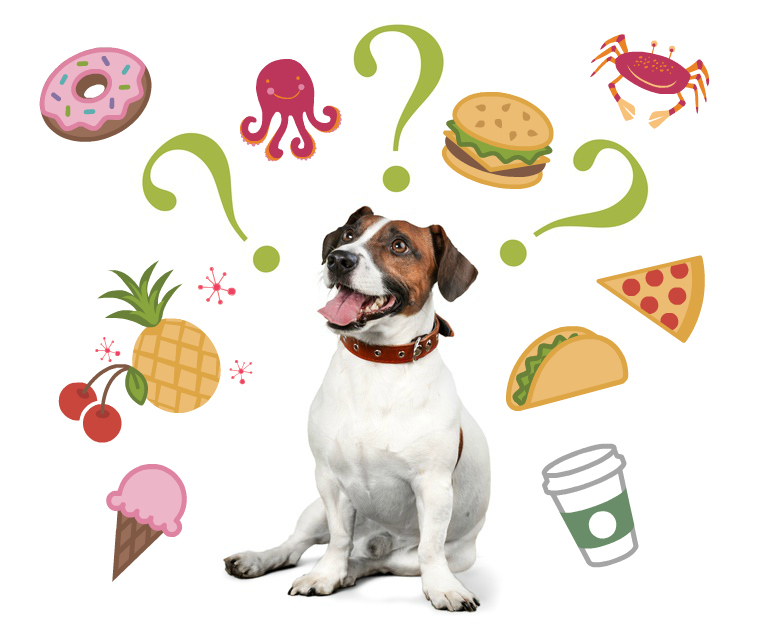 dog with question marks looking at several high histamine foods