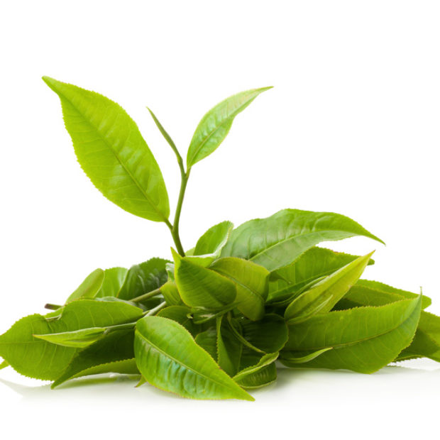 EGCG Tea Polyphenol Chills Out The Brain, Acts as Antihistamine