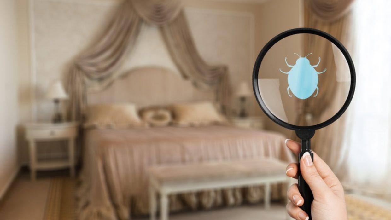 Bed Bug Poop Triggers Histamine